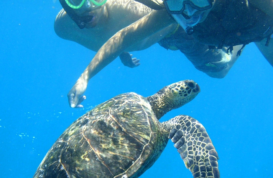 Diving with Caretta at Proti Isle